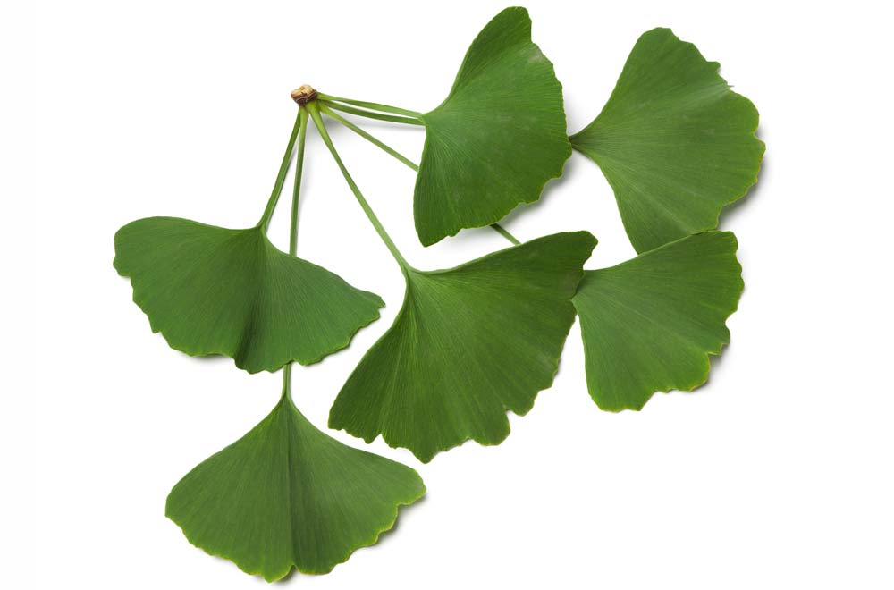 Ceaiurile cu efect de Viagra. Care sunt plantele care stimulează potenţa | primariagircina.ro